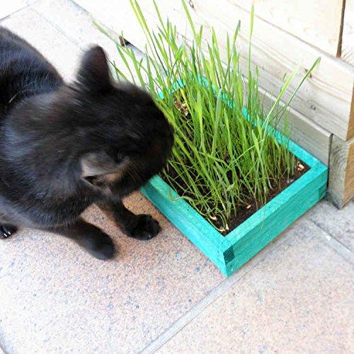 kit-de-hierba-para-gato
