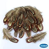 50 Pcs Natural Ringneck Pheasant feather 2-3 inches