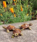 Animated Poly Resin Small Turtle Shaped Pot Feet/planter Risers Set of 3