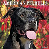 img - for 2016 Just American Pit Bull Terriers Wall Calendar book / textbook / text book