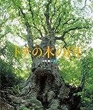 トチの木の1年 (ランドセルブックス)