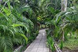 Pathway, Hemingway House, Hemingway Museum, Finca Vigia, Havana, Cuba by Adam Jones / Danita Delimont Museum Quality Fine Art Print sold by Great Art Now, size 38x26 inches. This print is popular in our Scenic Art, Path Art, Photography, and ...