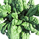 Search : Seeds of Change Certified Organic Spinach, Tyee F-1 - 2.1 grams, 200 Seeds Pack