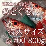 のどぐろ 喉黒 赤むつ 特大サイズ 生 鮮魚(築地直送)約700-800g/1尾 日本海産(鳥取・山口・島根他)アカムツ【生のどぐろ700-800g】