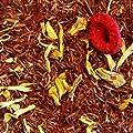 Rooibos-Tee Oma`s Sahne von Sylter Teekontor auf Gewürze Shop