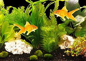 """Zoomeister - PflanzenSet """"Goldfisch"""" bis 130L"""