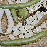 Broad Beans Hangdown 100 gr - - 1 pack of seeds