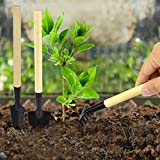 Freehawk-Mini-Gardening-Plant-Pot-3-pieces-Gardening-Tools-Small-Shovel-Rake-Spade