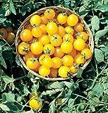 David's Garden Seeds Tomato Cherry Gold Nugget D738 (Gold) 50 Organic Seeds