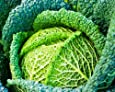 SeeKay Savoy Cabbage Winter King appx 250 seeds