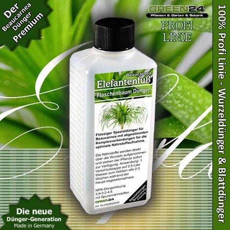 beaucarnea-diadema-palm-elefante-arbol-de-pie-liquid-alta-tecnologia-fertilizantes-npk-fertilizantes