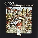 Blind Dog at St. Dunstans By Caravan (2011-05-30)