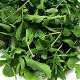Arugula Seeds ► Certified ORGANIC NON-GMO Heirloom...