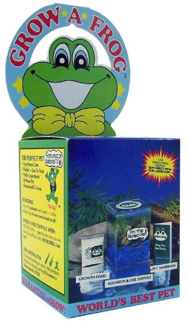 Olympia Sports 11832 Grow-A-Frog Kit  цена и фото