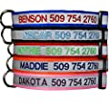 Reflective Embroidered Personalized Dog Collar, Adjustable