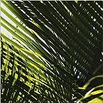 1art1 50654 Pflanzen - Palmenblatt Po...