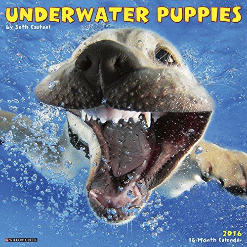 2016 Underwater Puppies Wall Calendar