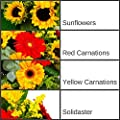 Clare Florist Summer Sunshine Fresh Flower Bouquet - Germini, Solidaster, and Sunflowers in Warm Red and Yellow Hues