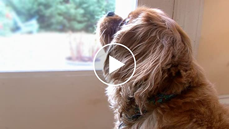 energy efficiency tips for pet owners