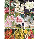 SUMMER MIXED FLOWER BULBS PACK OF 10 BULBS BY SUPER AGRI GREEN, 1 KHURPA FREE WITH THIS COMBO
