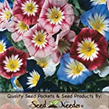 "40 Seeds, Morning Glory ""Ensign Mix"" (Convolvulus) Seeds by Seed Needs"