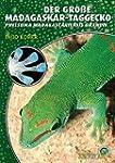 Der Gro�e Madagaskar Taggecko. Phelsu...