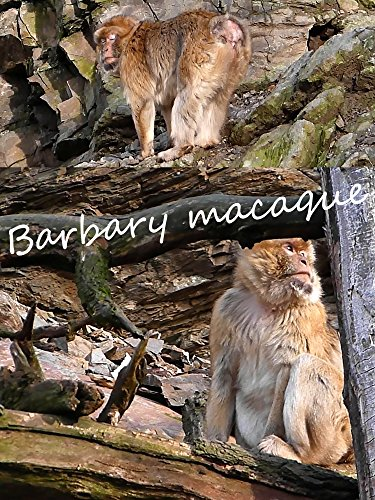 Barbary macaque on Amazon Prime Instant Video UK