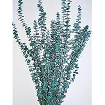 Eucalyptus-Branches - Green