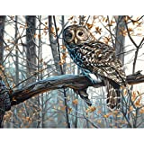 USA Produkt - Malen nach Zahlen Kit 14 X11Wise Owl