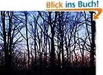 Photo Gallery of Dark Forest (English...