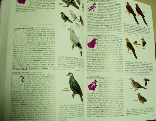 Field Guide to Illustrate and Describe the Varied Bird Species of Borneo