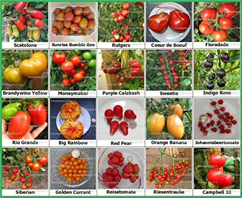 tomaten-set-2-historische-alte-tomatensorten-20-arten-samen-fleischtomate-cherrytomate-cockteiltomat