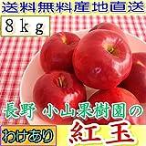 訳あり 産地直送 長野産 減農薬・有機肥料 栽培樹上完熟紅玉 ご家庭用 約8kg小玉32~60個入 完熟 リンゴ りんご わけあり品