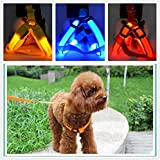 Alcoa Prime LED Nylon Fishional Design Pet Dog Cat Collar Led Glow Flash Light Dog Puppy Belt Harness Leash Tether Pet Safety Collar Rope