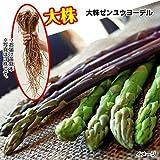 国華園 山菜苗 アスパラガス 大株ゼンユウヨーデル 5株