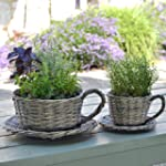 2 Willow Teacup Planters - Gift Boxed...