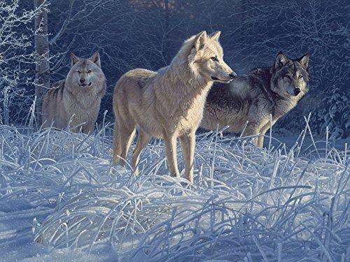 White Gold Wolves