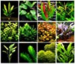 50 Live Aquarium Plants / 12 Different Kinds - 4 Amazon Swords (3 kinds, 1-RED), Java Fern, Ludwigia, Cabomba and much more! Great plant sampler for 40-50 gal tanks