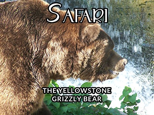 the-yellowstone-grizzly-bear