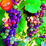 Big Promotion!100 Seeds/Bag Imported Rainbow Grape Seeds Advanced Fruit Seed Natural Growth Grape Delicious Fruit...
