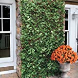 Wooden Expandable Artificial Faux Ivy Leaf Trellis Privacy Fence Screen Windscreen