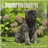 BrownTrout Bouvier des Flandres 2014 Wall