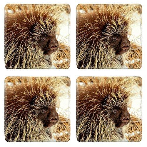 Liili Square Coasters Porcupine Seedskadee NWR Natural Rubber Material Image 16013698797