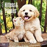Kittens and Puppies Calendar 2017 ~ Deluxe Wall Calendar (STANDARD)