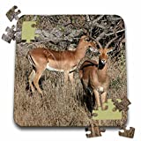Angelique Cajam Safari Animals - South African 2 Impalas front and side view - 10x10 Inch Puzzle (pzl_20118_2)