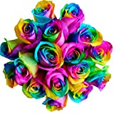 12 Stems - Fresh Cut Rainbow Roses from Flower Explosion