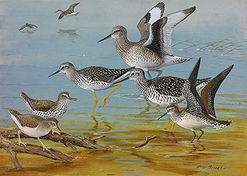 Shorebirds Painting Wallpaper Wall Mural - Self-Adhesive - Multiple Sizes - National Geographic Image from Magic Murals