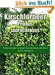 Kirschlorbeer - Prunus laurocerasus:...