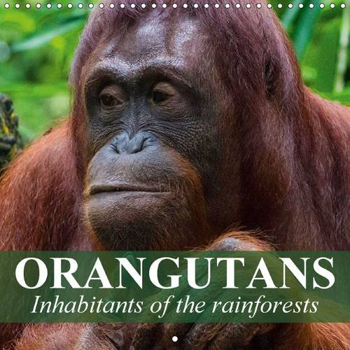 Orangutans Inhabitants of the Rainforests: Intelligent Creatures Who Clearly Have the Ability to Reason and Think (Calvendo Animals) (Rain Calendar 2015 compare prices)