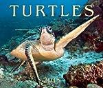 Turtles 2015